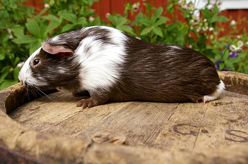 Pippi (1)